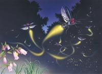 発光しながら群れ飛ぶゲンジボタル