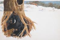 冬ごもり中に出産するツキノワグマ:地中断面