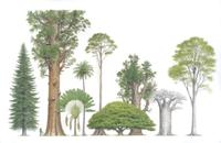 世界の巨木