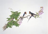 キリの花とツバメ