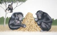 道具を使ってシロアリ塚でシロアリを捕るチンパンジー 32043000034  写真素材・ストックフォト・画像・イラスト素材 アマナイメージズ