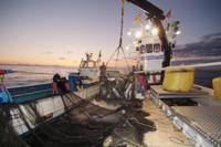 サケの漁 32049000226| 写真素材・ストックフォト・画像・イラスト素材|アマナイメージズ