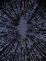カラマツ林から見上げた星空(魚眼レンズ撮影)