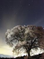 星空と桜 32052000023| 写真素材・ストックフォト・画像・イラスト素材|アマナイメージズ