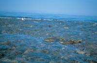 オホーツク海から川へと遡上するサケの群れ 32053000101| 写真素材・ストックフォト・画像・イラスト素材|アマナイメージズ