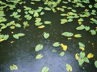 雨の降り出した池の様子