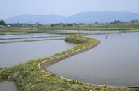 水の張られた水田の風景