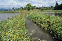 田植え直後の水田と小川風景