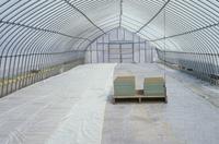 籾の成長 ハウスの中で育てられる籾 春