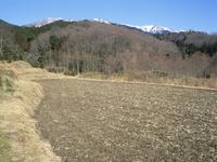 春を待つ田んぼと雑木林