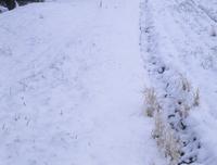 あぜ道の変化(冬〜春) 7-2 雪が積る