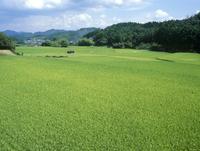 水田風景定点 A 18-10