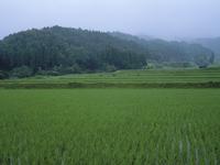 レンゲ水田の定点 A 18-10 梅雨の日