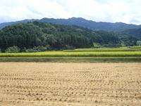 レンゲ水田の定点 A 18-16 梅雨の日
