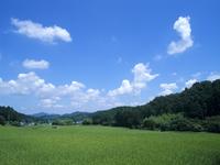 夏の水田と雲