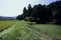 水田まわりで 水田と隣り合わせのため池
