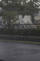 降雨(夕立ちで激しい雨が降る)