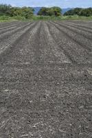 大豆畑の定点14−1(種まきから8日目、発芽が見られる)