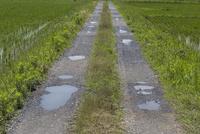 梅雨入り 雨上がりの野道 車の轍に水たまりができる