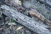 カブトムシの幼虫 不要になったほた木置場