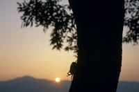 夕方、活動をはじめたカブトムシ