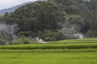 夏の水田風景、畔の雑草を刈り取り集めて燃やす