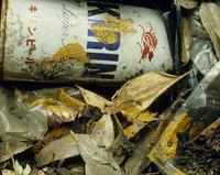 ゴミ捨て場にヘビヌカホコリ(餌となるバクテリアが多いため)