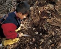 カブトムシの幼虫を探す子供 32064000096| 写真素材・ストックフォト・画像・イラスト素材|アマナイメージズ