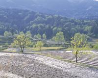 水田の地帯 早春
