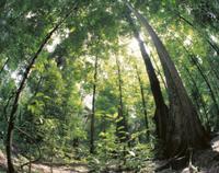 熱帯雨林:内部のようす