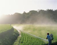 夏の水田の消毒作業