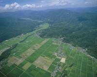 空撮 夏の水田