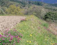 春の田んぼ脇の土手