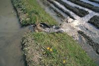 田んぼの落水