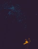 発光するヒカリキノコバエの仲間(グローワーム)の幼虫