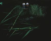 夜、川岸の葉の上で光るゲンジボタルを観察する子供