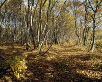 秋の雑木林