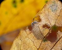 枯葉にいるダンゴムシ