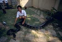 アミメニシキヘビ 約5m