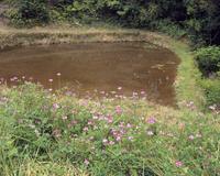 田に水が入る(冬期湛水水田)