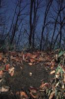 カブトムシの幼虫 (土中のようす:冬) 32073000027| 写真素材・ストックフォト・画像・イラスト素材|アマナイメージズ