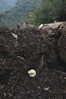 地中のカブトムシの幼虫 (地中断面) 32073000043| 写真素材・ストックフォト・画像・イラスト素材|アマナイメージズ