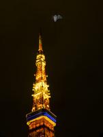 東京タワーとアブラコウモリ