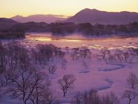 冬の川沿いの風景