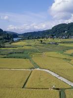 大江川湿原