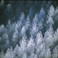 霧氷のカラマツ林 32089000305  写真素材・ストックフォト・画像・イラスト素材 アマナイメージズ