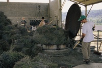 ラベンダー(ラバンディン、ラバンジン) の蒸留所