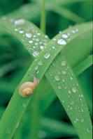 雨滴とカタツムリの仲間