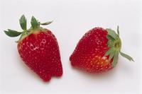 イチゴ 品種:アイベリー