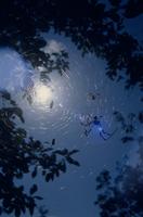 ジョロウグモ 巣